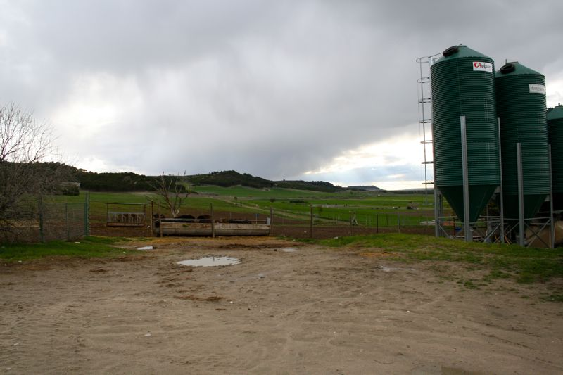Crica Organic Dairy Farm