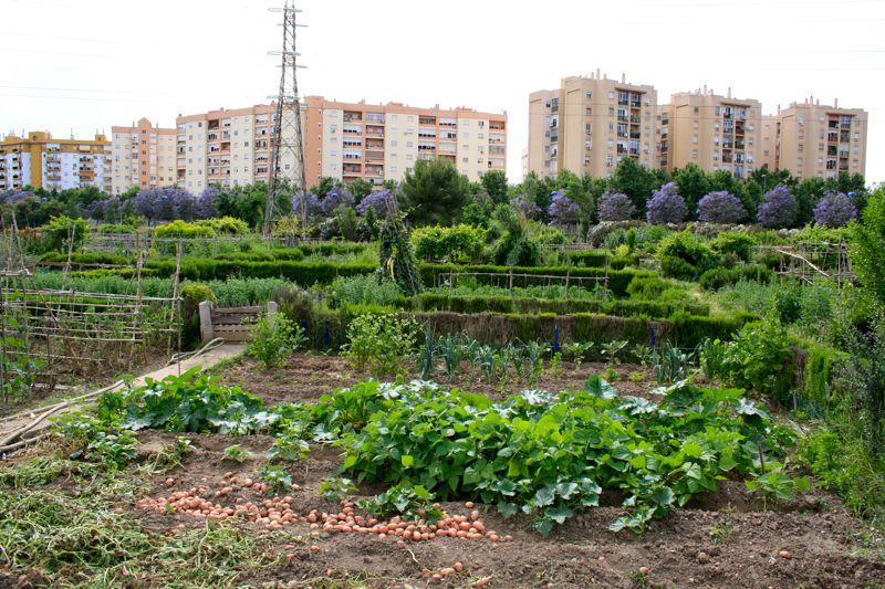 Urban garden Seville