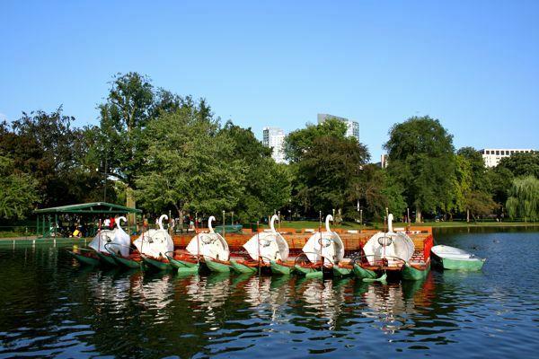 Boston Swan Boats