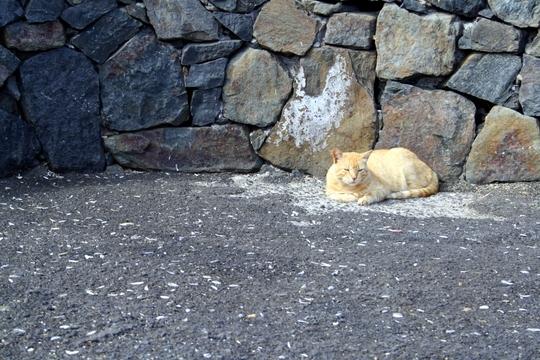 Cat in Fuerteventura
