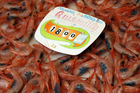 Malaga market shrimp