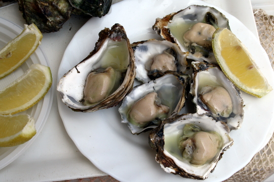 oysters in Cadiz