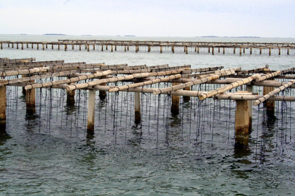 visit mussel beds in Spain