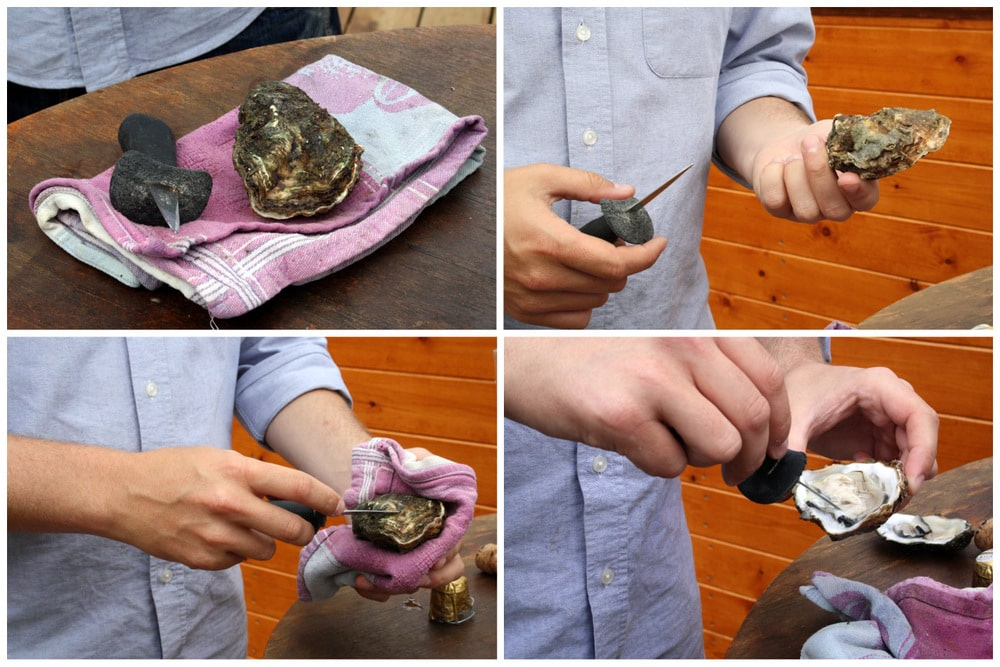 Musclarium Spanish oysters Ebro River