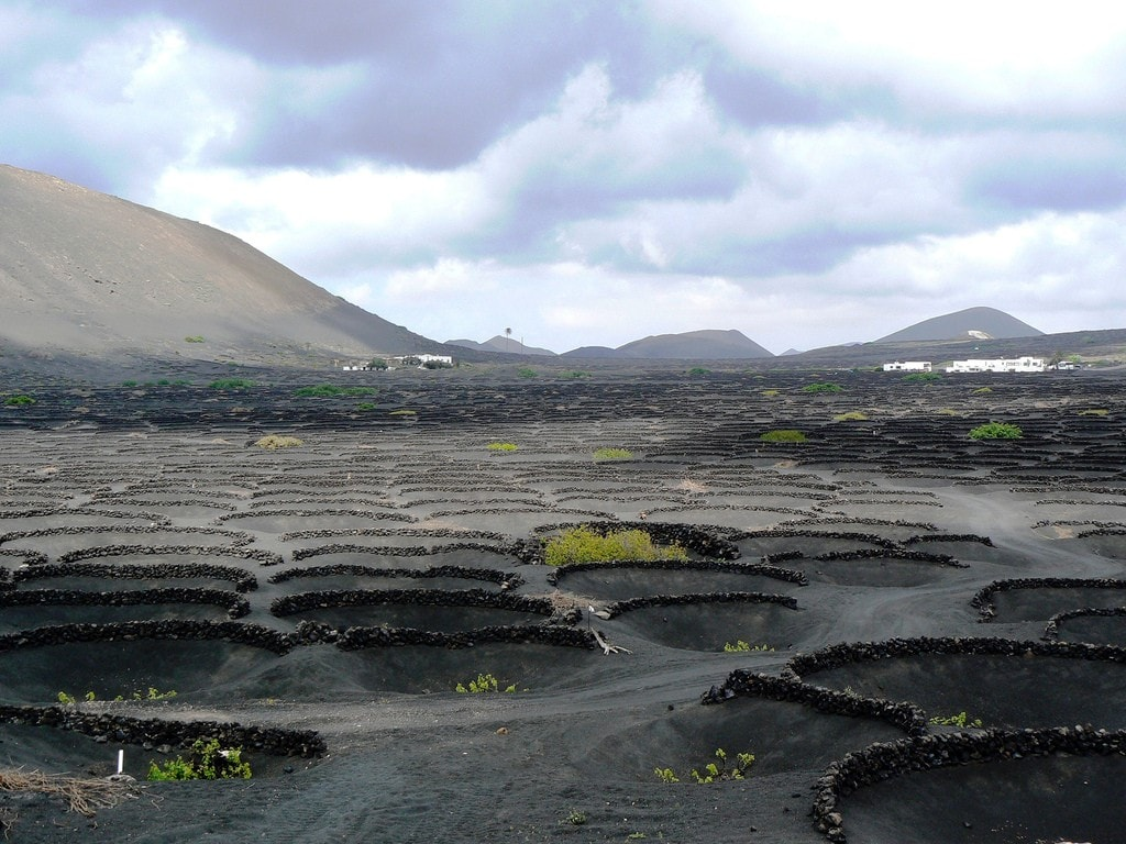 The volcanic vineyards at El Grifo on the Canary Island of Lanzarote are unlike any other vineyards in the world!