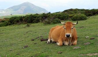 6 Spectacular Views in Asturias