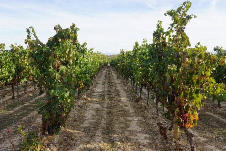 Ysios Bodega la Rioja best bodegas
