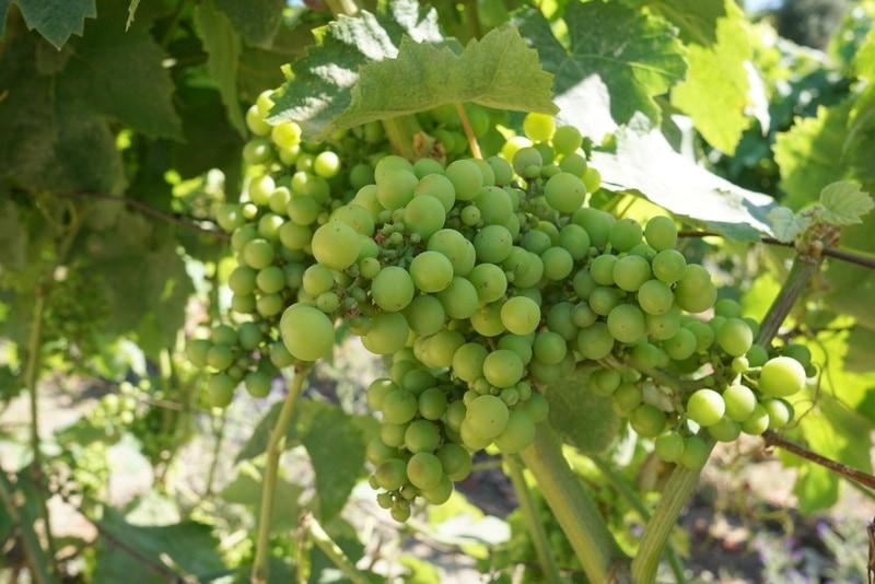 Alta Alella Wine and Cava Day Trip from Barcelona