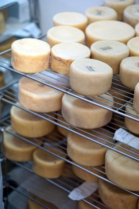 Serra da Estrela cheese aging. Portuguese foods.