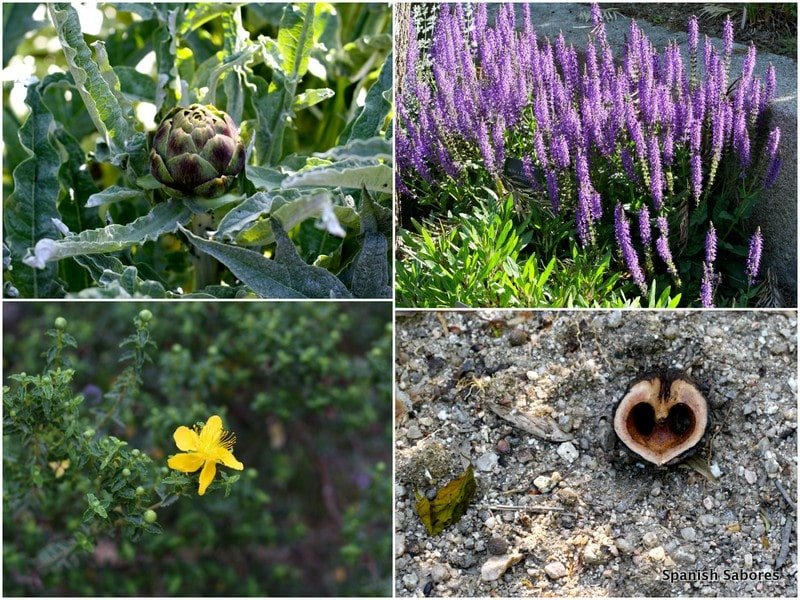 Madrid Botanical Garden 5