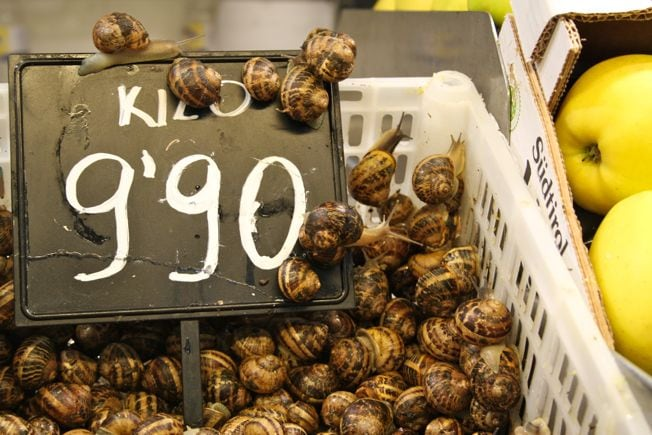 snails for sale