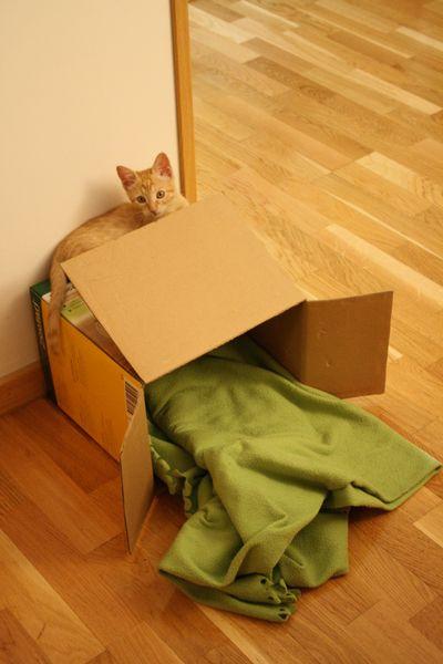 Lima Box