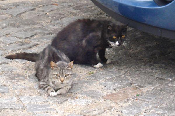 Stray cats in Porto