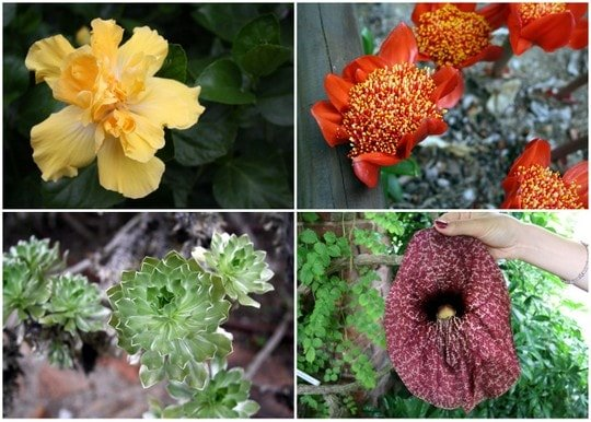 Marimurtra flowers