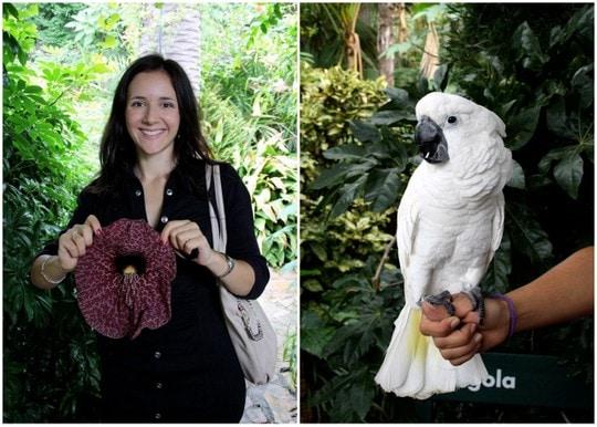 Marimurtra parrots