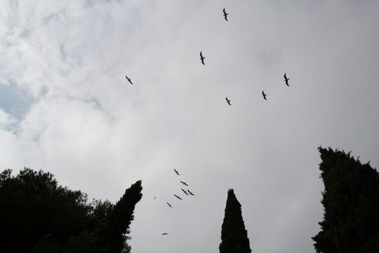 Santa Clotilde birds