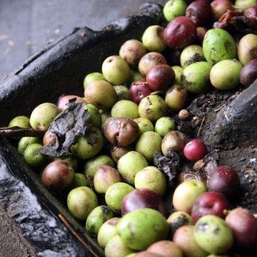 Cortijo Angulo Jaen olive oil