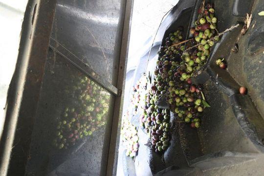 Cortijo Angulo Jaen olives