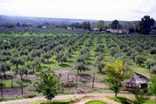 Spanish Olive oil 101