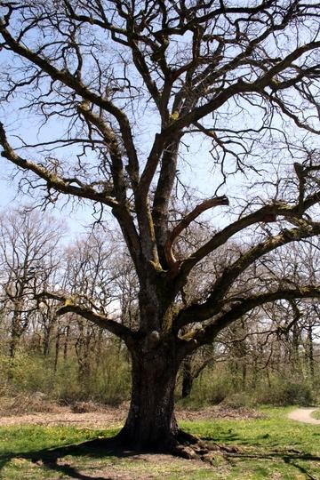 Navarra Forest