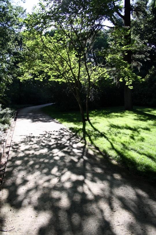 Trees in Capricho Park
