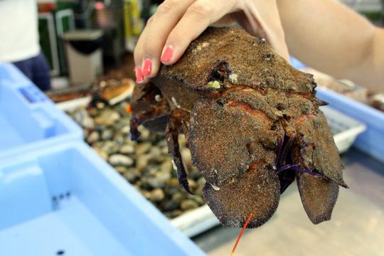 Murcia fish