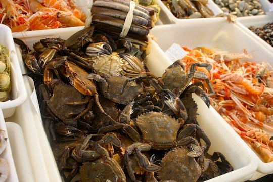 There are many types of crab in Spain. These nécoras are a favorite during Christmas when it is very common to eat seafood in Spain.