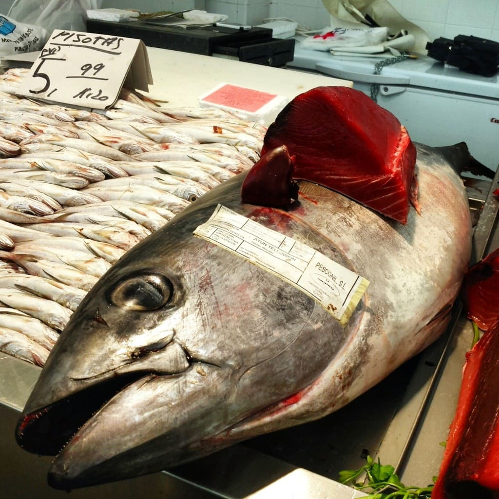 Cadiz tuna
