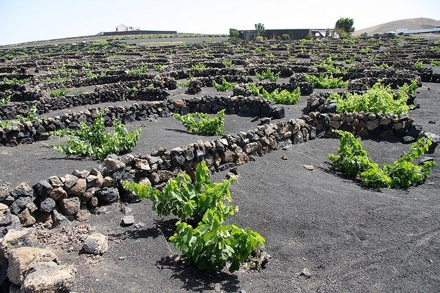 Black volcanic sand makes for amazingly unique wines in Lanzarote, one of the top off-the-beaten-path wine regions in Spain.