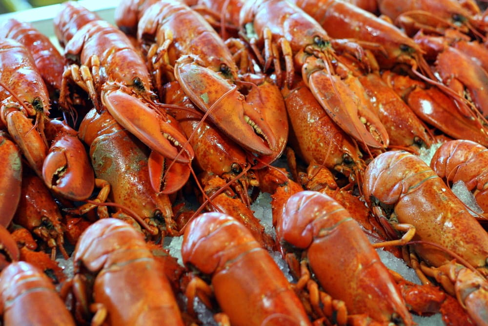 Cape Cod Comfort Food with Turtles Travel