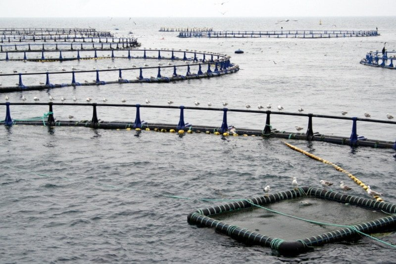 Tuna pools at tuna farms
