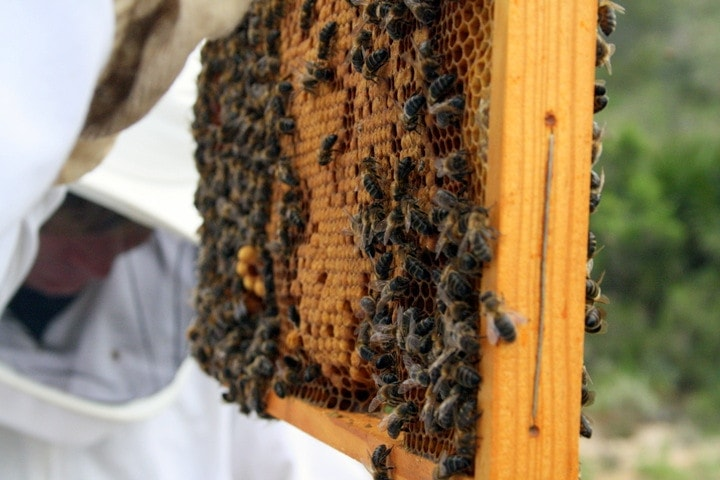 Getting Up Close and Personal with Honey Bees in Catalonia