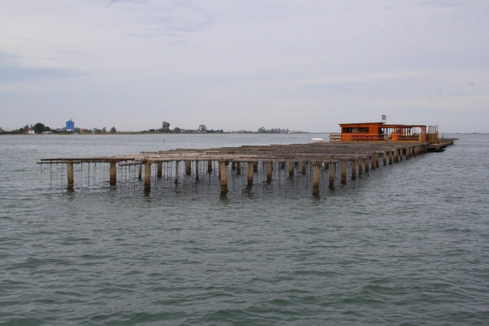Visiting mussel farms in the Ebro River