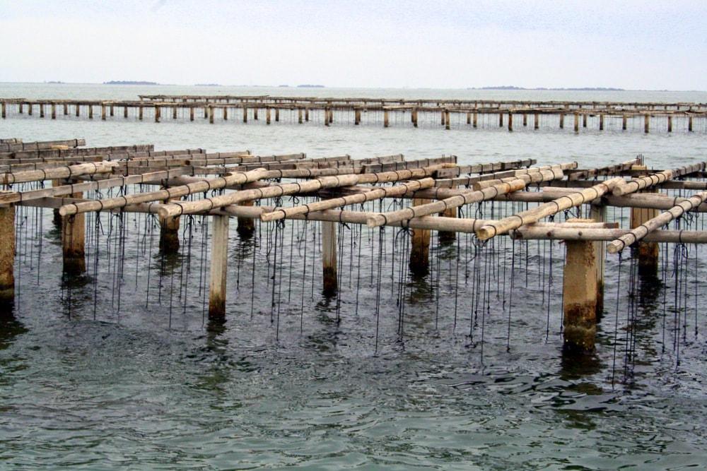 visit mussel beds in Spain