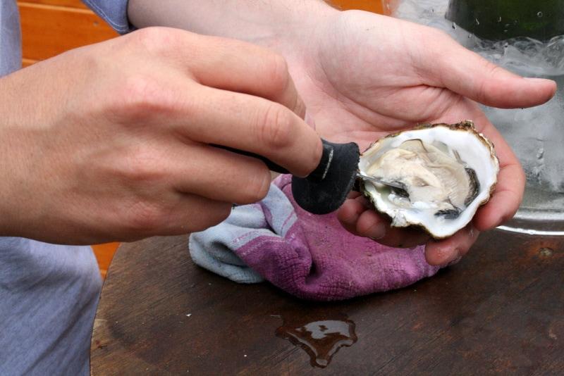 Terres de L'Ebre oysters