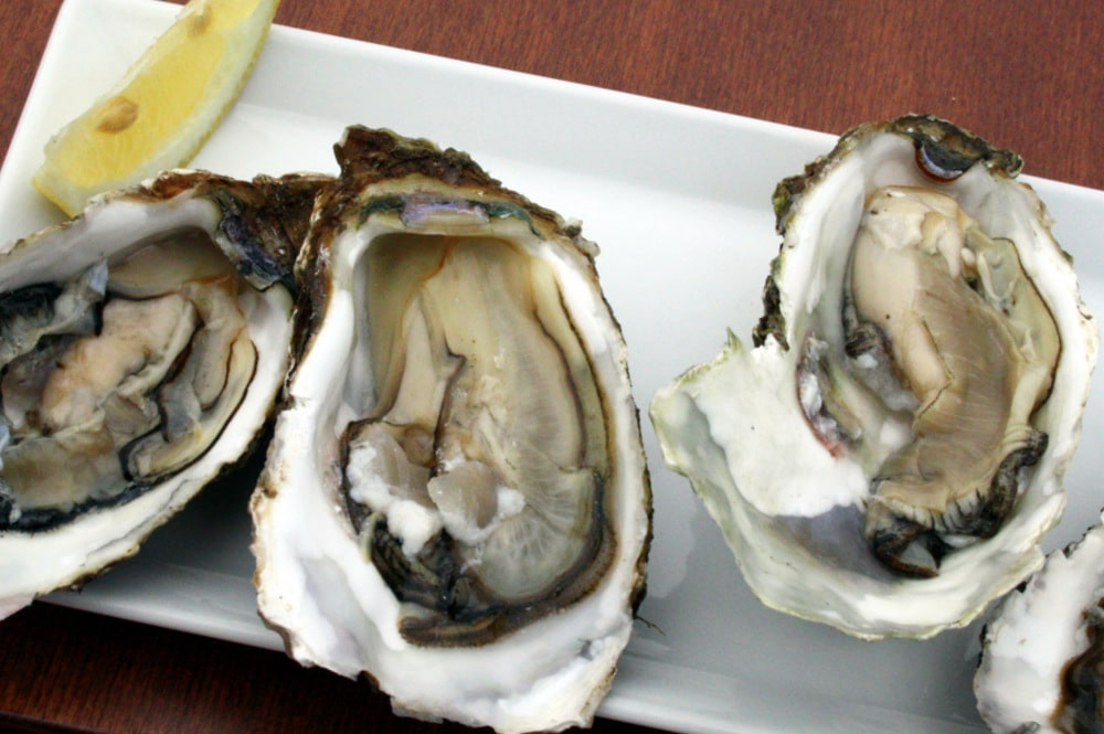 Spanish oysters, Ebro river oysters