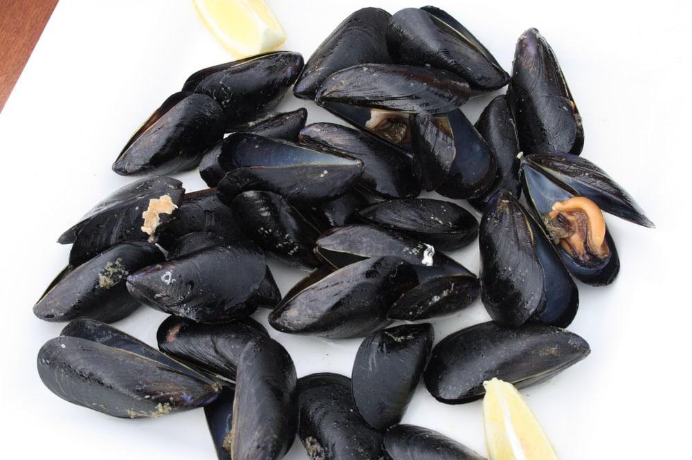 Musclarium Spanish oysters Ebro River