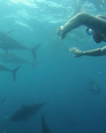 tuna tour in l'ametlla del mar