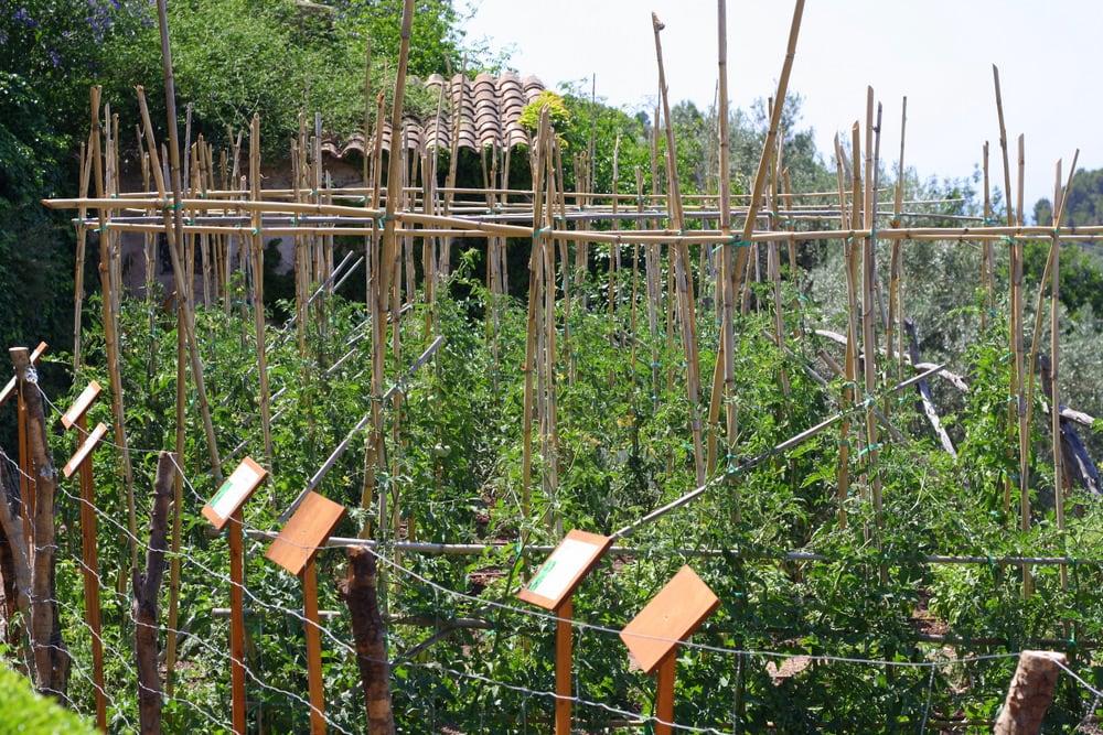Cas Xorc vegetable garden