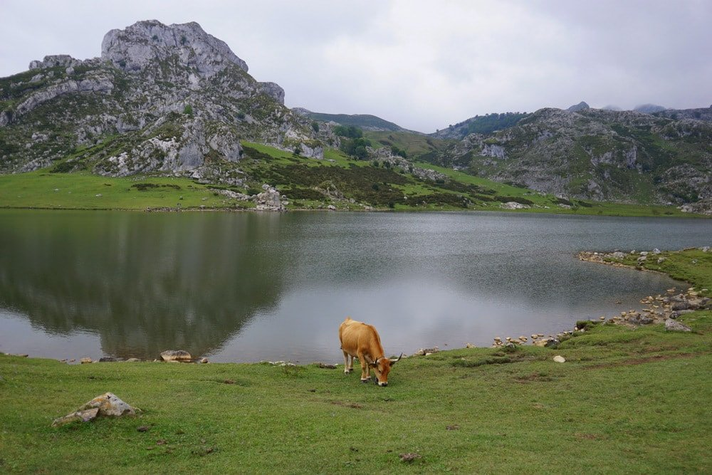 Taking a road trip through northern Spain: the Covadonga Lakes are a must!