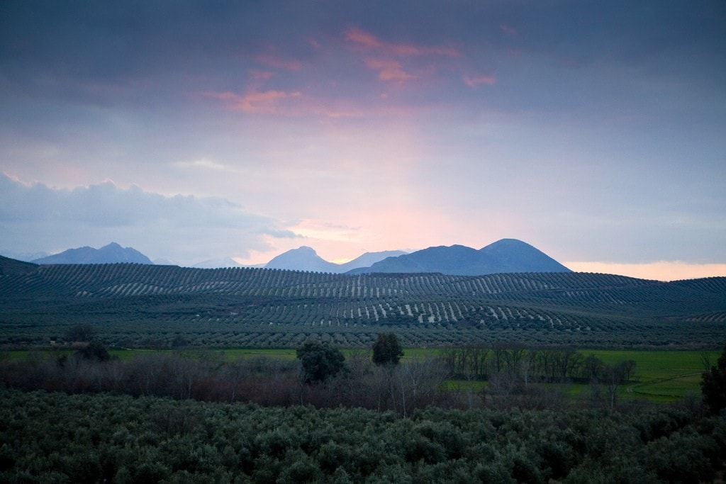 Olive trees stretch as far as the eye can see in Baeza, Andalusia, Spain, in Spain´s olive oil heartland