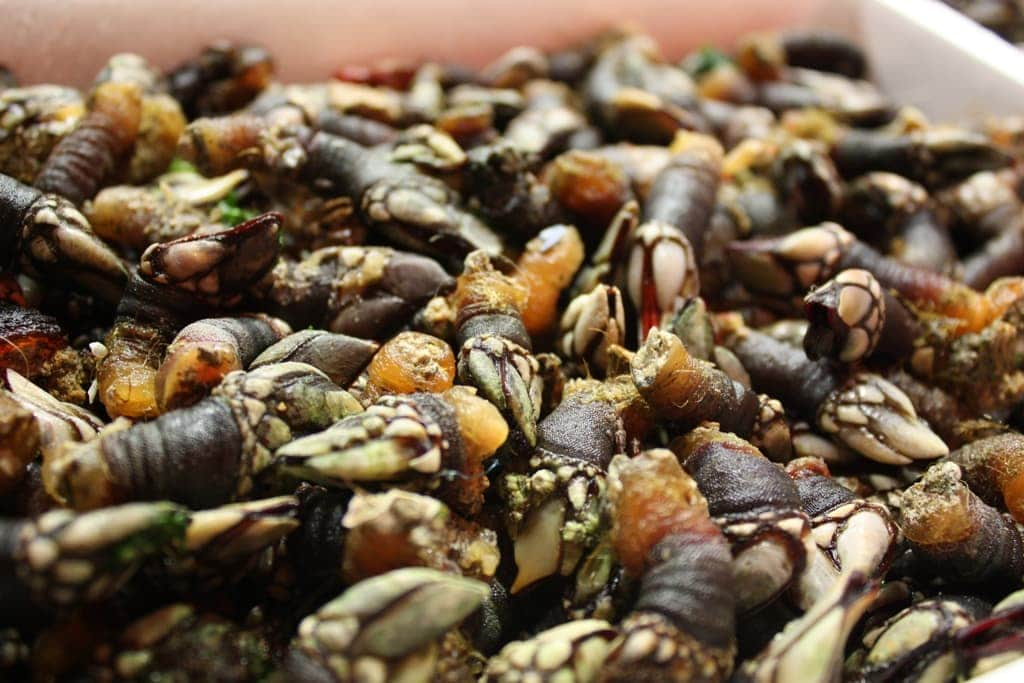 Food experiences in Spain that are on my bucket list: eating percebes