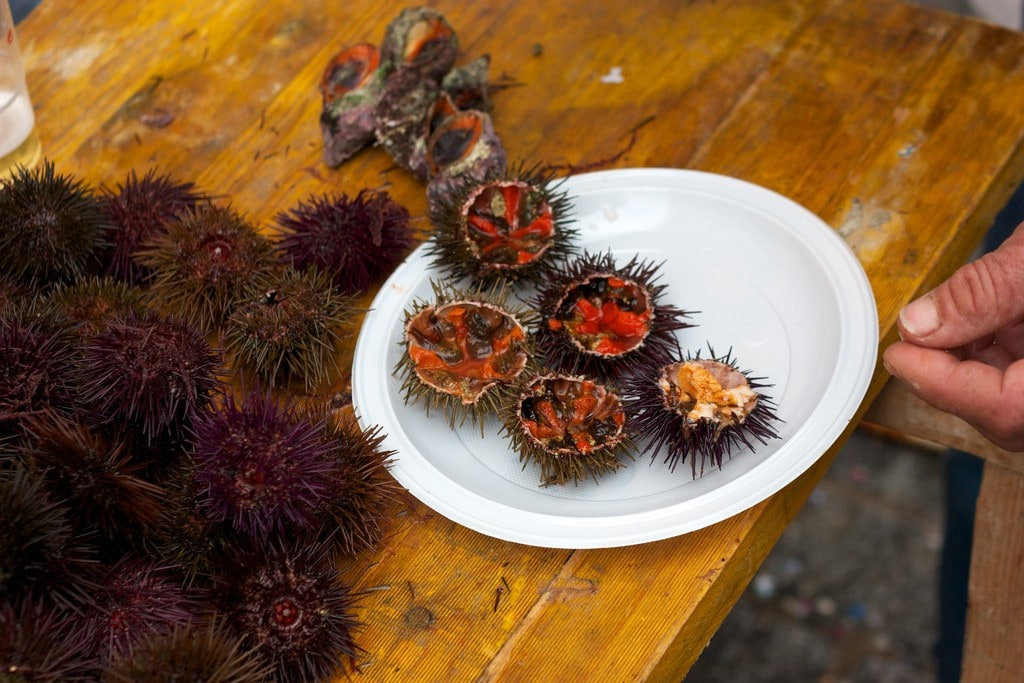 Slurping down sea urchins is what the erizada food festival in Cadiz is all about!