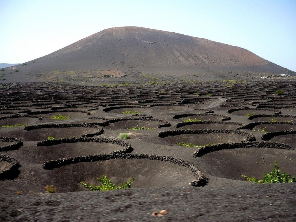The ominous volcanic ash vineyards at La Geria winery in Lanzarote are the backdrop to a totally unique harvest festival.