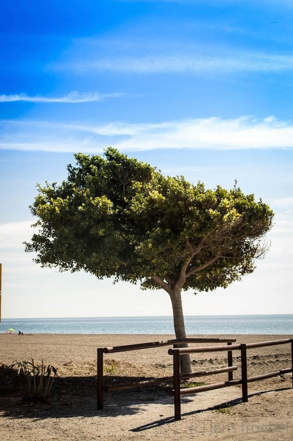 Getting out of the city and visiting places like El Palo beach is one of the best non-touristy things to do in Malaga. Check out our ultimate travel guide to Malaga for more suggestions!