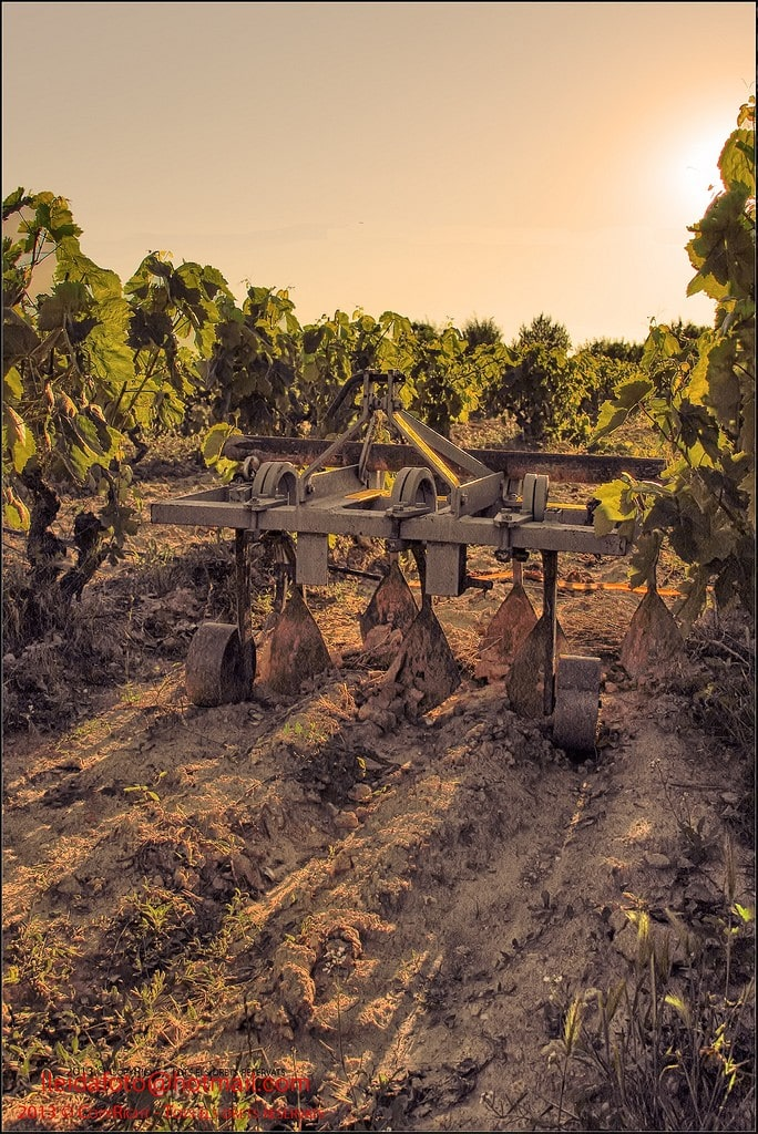 The old ways still rule in the Spanish wine region of Priorat, where some of the world's best Garnachas are being made.
