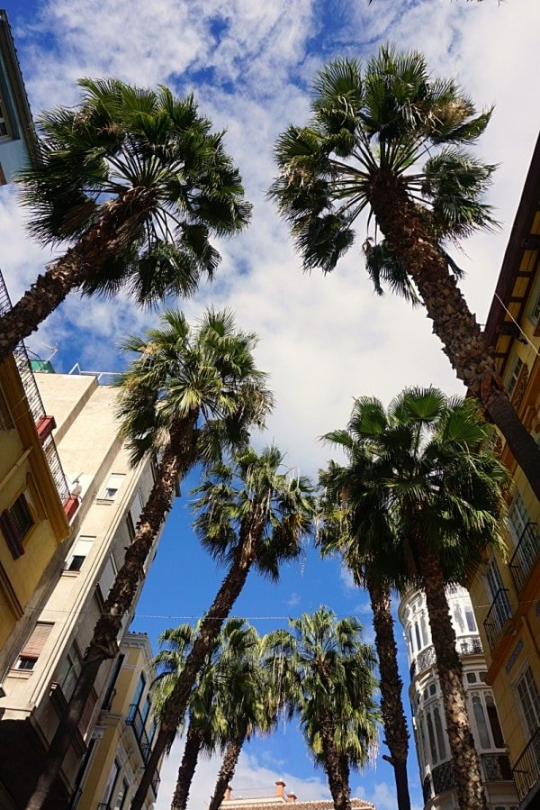 Looking up through the palm trees in Malaga - such a beautiful city with so many things to do.
