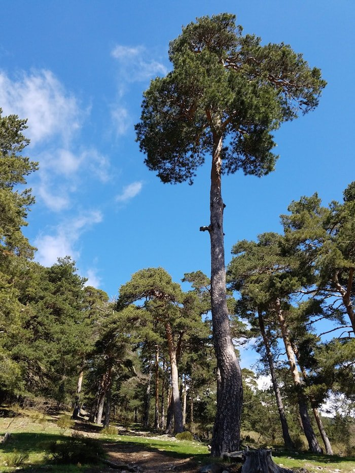 Hiking routes in Cercedilla