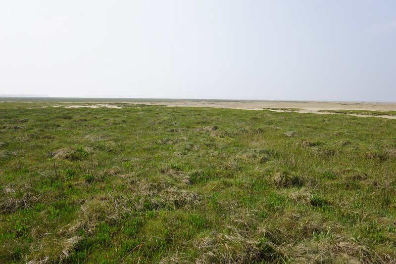 The beautiful marshes in Baie de Somme where sea asparagus grows.