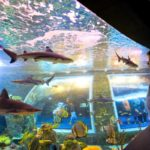 Granada's Science Park is first on our list of things to do in Granada with kids, and for good reason! Check out that amazing BioDome!